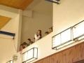2013_gymnastika003